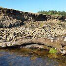 Hill End Stream Log by Richard Winskill