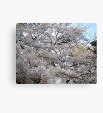 Sakura - 30 Canvas Print