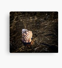 Sea scapes Canvas Print
