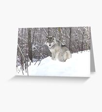 My Wolf : The kiss of the wolf Greeting Card