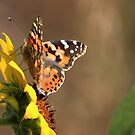 Butterfly and Sunflower by Lori Peters