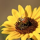 Bee on Sunflower by Lori Peters