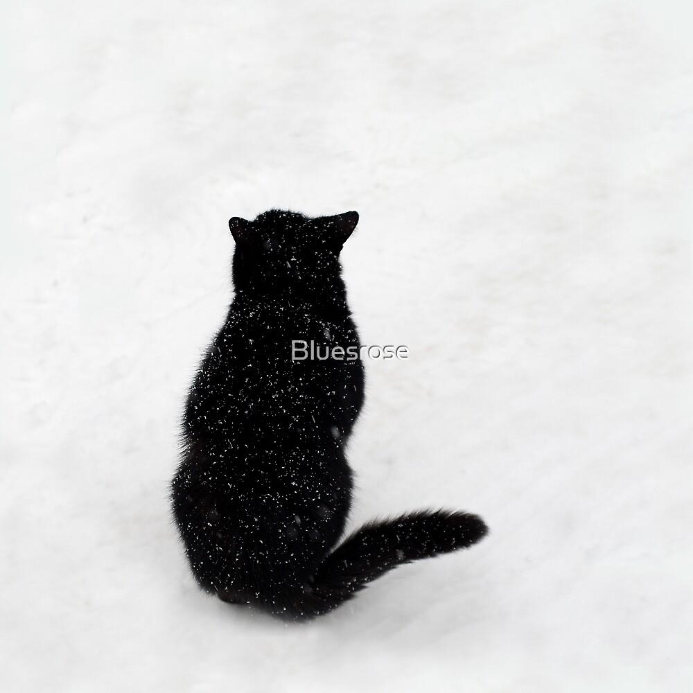 Snowcat by Bluesrose
