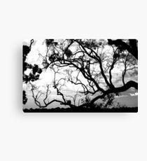 Eucalyptus Canvas Print