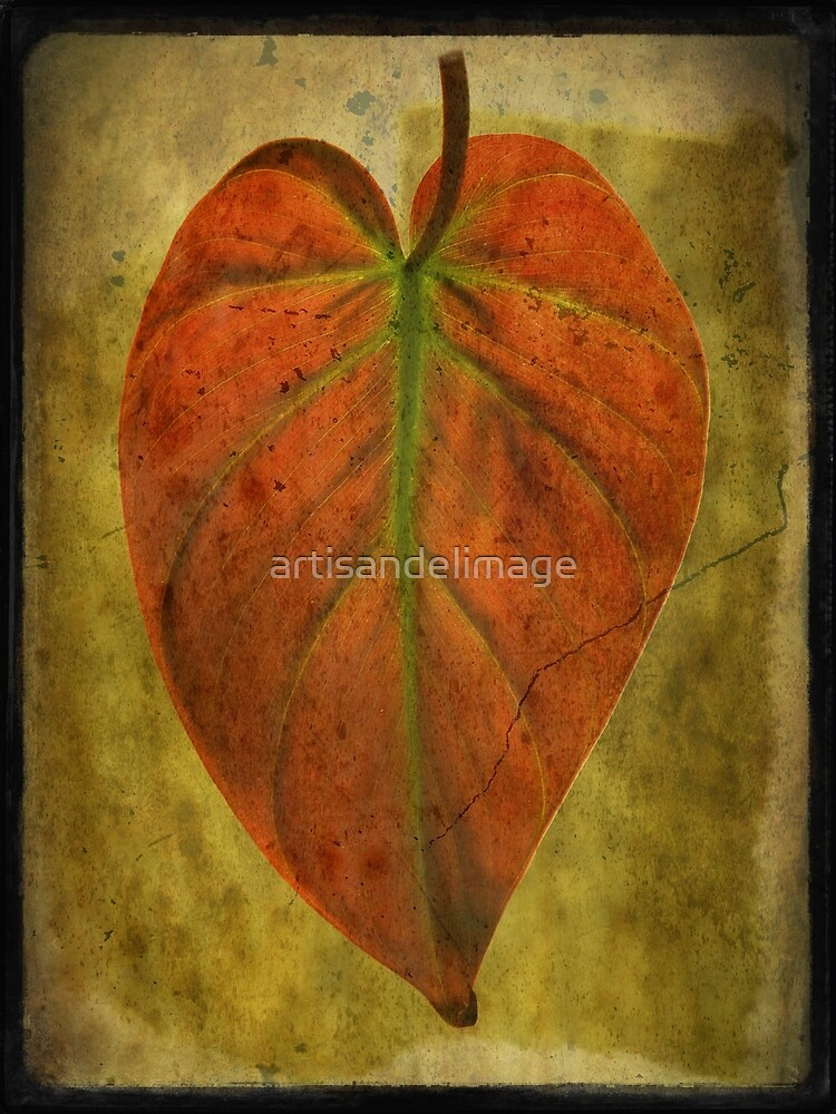 Botanical Wonder by artisandelimage
