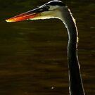 Avian Beauty ~ Part One by artisandelimage