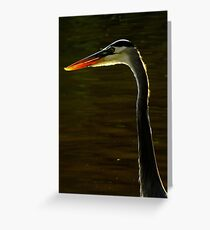 Avian Beauty ~ Part One Greeting Card