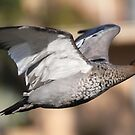 flying duck by parko