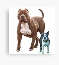 Pit bull Boston terrier Canvas Print