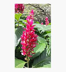 Tropical Fowers Photographic Print