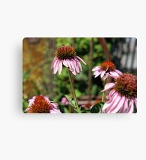 Coneflower Photograph Canvas Print