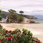 Pohutukawa's in full bloom..............!! by Roy  Massicks