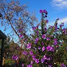 in full flower by jayview