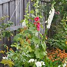 a garden corner by jayview