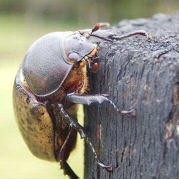 Hercules Beetle High Res by Starkhorse
