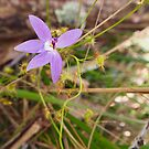 native orchid  by jayview