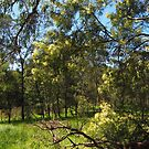spring bushland by jayview