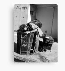 Forage Canvas Print