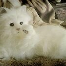 Snow Puff...I'm so beautiful... © by Dawn Becker