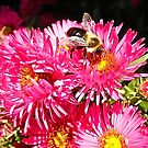 Pink Daisies and Bee by Shulie1