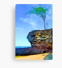 Rocks & Bush, Lamaha'i Beach, Kauai Canvas Print