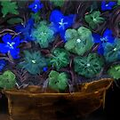 Flowers in a Pot- negative by Anne Gitto