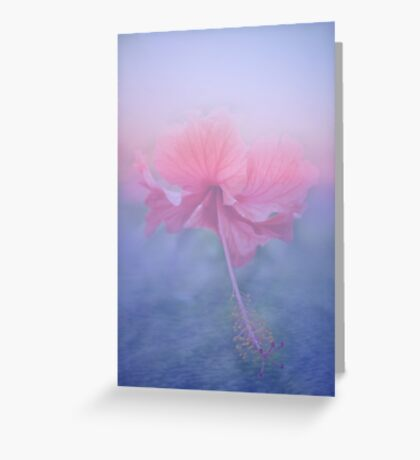 Hibiscus Sky ~ Greeting Card