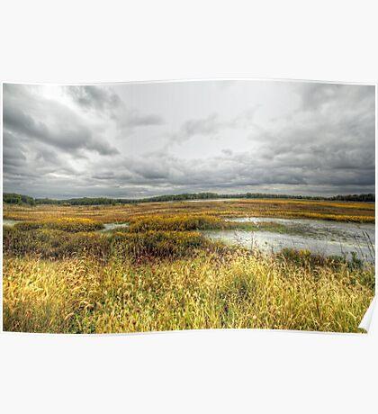 Autumn Salt Marsh - Bombay Hook National Wildlife Refuge - Delaware - USA Poster
