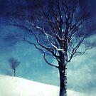 The Winter Tree by kibishipaul