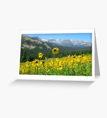 Colorado Wildflowers Greeting Card