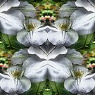 White Clematis Flowers Abstract by SmilinEyes