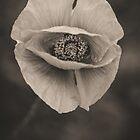 Poppy portrait session by alan shapiro
