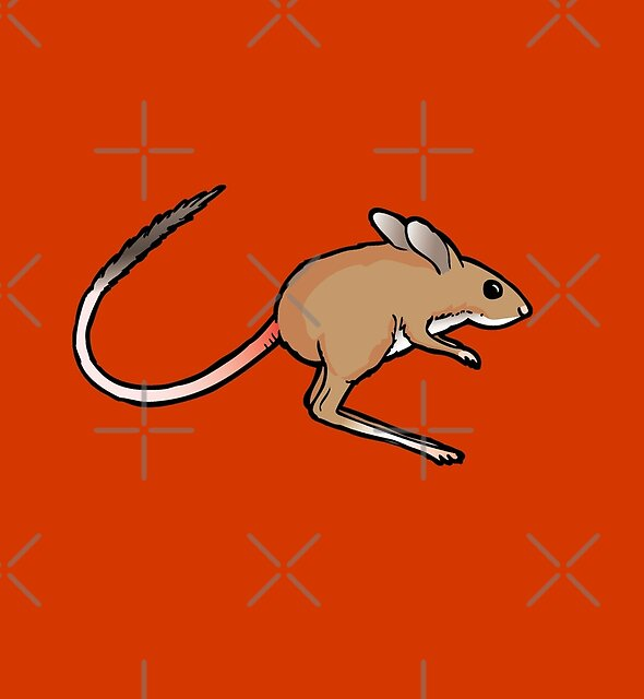 Australian  Spinifex hopping mouse graphic by Sarah Trett