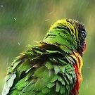 April Shower. by Trish Meyer
