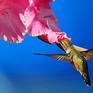 THE FLIGHT OF THE HUMMINGBIRD by RoseMarie747