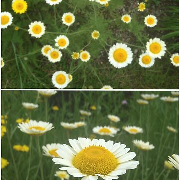Flowers by genowefa