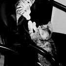 Playful kittens bro & sis by patjila