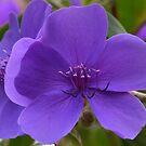 Purple flower with little pink hearts by Arie Koene