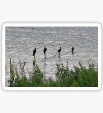 Eyebrook Reservoir Cormorants Sticker