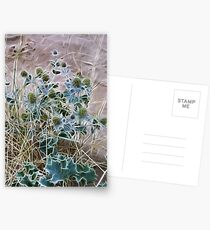 Sea Holly Postcards