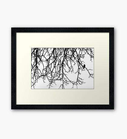 Bird Silhouette Framed Print