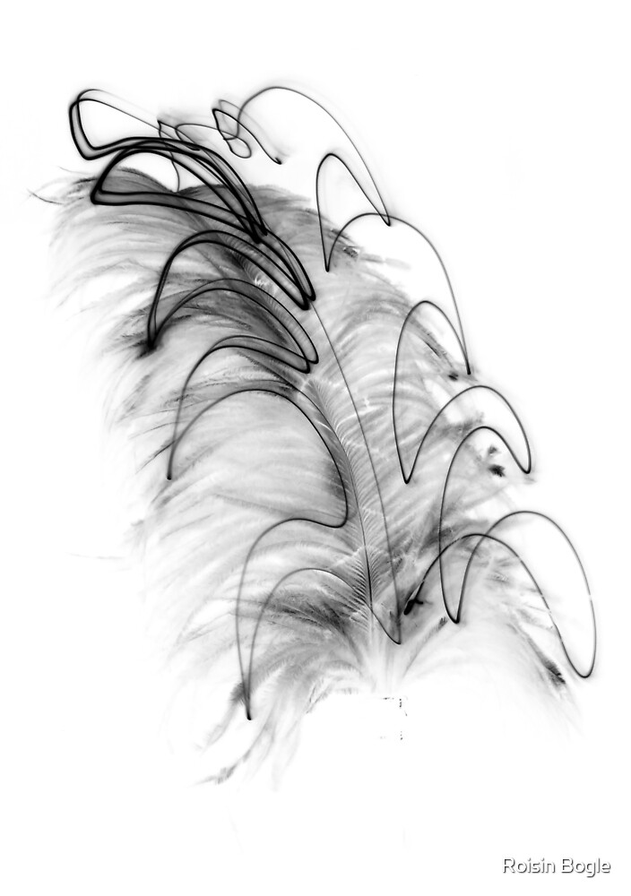 Feather Black and White by Roisin Bogle