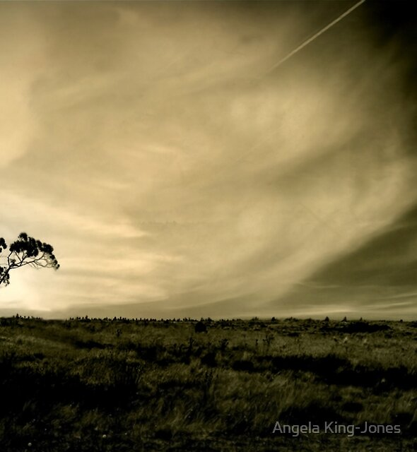 Tasmania's countryside by Angela King-Jones