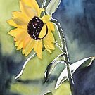 Sunflower by Sandra England