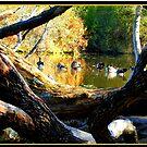Geese beyond the deadwood by Stephanie Wood