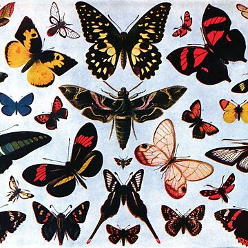 Collection of different butterflies by Fl0werdauqhter