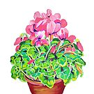 Cyclamen 2 by marlene veronique holdsworth