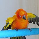 Turn It On - Sun Conure NZ by AndreaEL