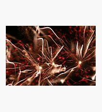 fireworks 8/11/14 Photographic Print