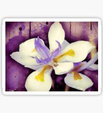 Purple Flower Dietes Photo Art Sticker